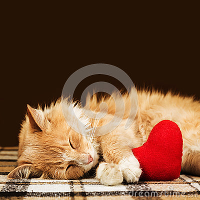 Free Red Fluffy Cat Asleep Hugging Soft Plush Heart Toy Royalty Free Stock Photography - 86575507