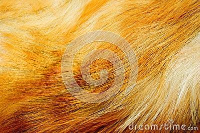 Red fox fur