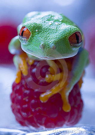 Free Red Frog Royalty Free Stock Photo - 1890525
