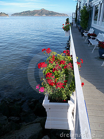 Red geranium in boxes overlooking sea background