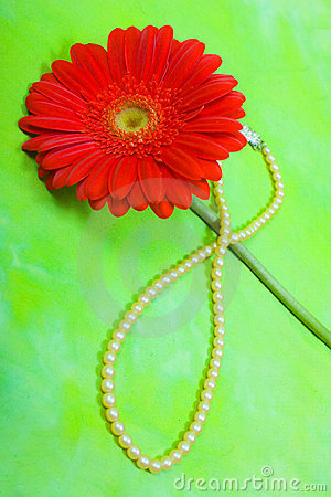 Free Red Gerbera And Pearl Stock Photography - 13113802