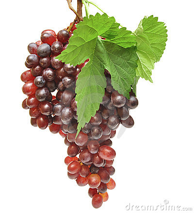 Free Red Grapes Stock Photography - 16269562