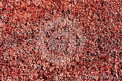 Red grass background