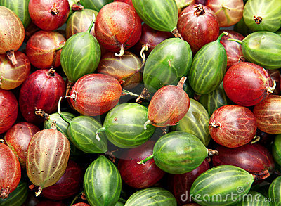Red and green gooseberry