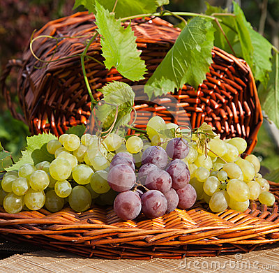 Red and Green Grapes on Wicker