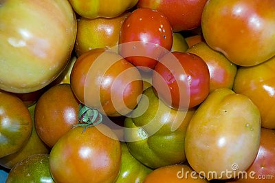 Red and green tomatoes background