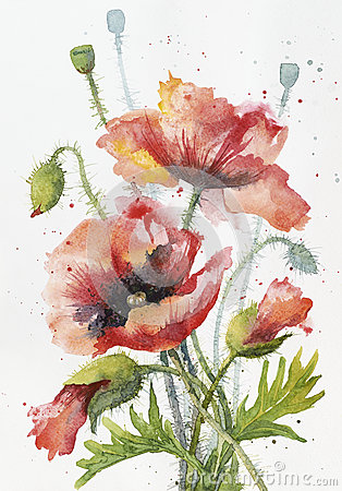 Free Red Hand Drawn Watercolor Poppy On White Paper Royalty Free Stock Photography - 59549697