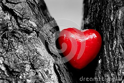 Red heart in a tree trunk. Romantic love