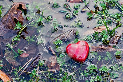 Red heart in water puddle on marshy grass, moss. Love, Valentine's Day.