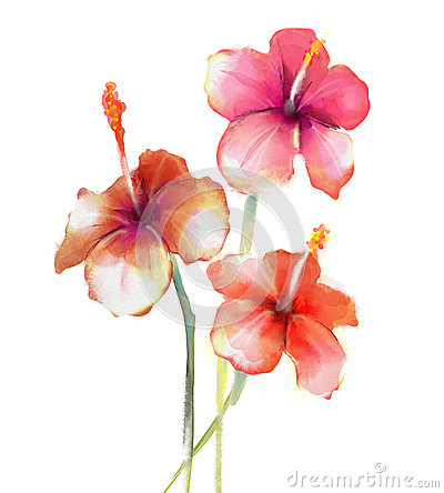Free Red Hibiscus Flowers Watercolor Painting Stock Photography - 49362602