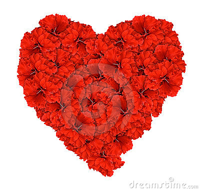 Red hibsicus flower love heart isolated