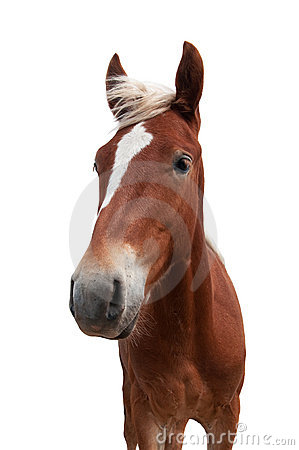 Free Red Horse Stock Photos - 20778593