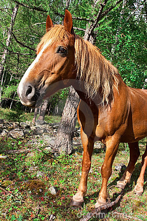 Red Horse portrait.