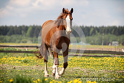 Red horse walk