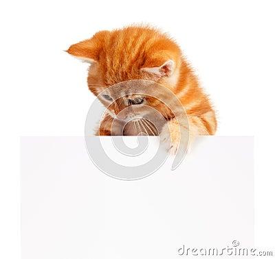 Free Red Kitten Royalty Free Stock Photo - 26828345