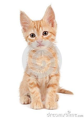 Free Red Kitten Stock Photos - 42092213