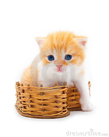Red kitten in a  basket