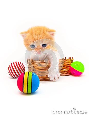 Red kitten in a  basket
