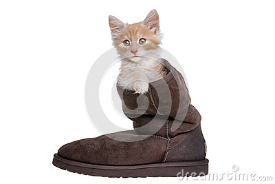 Red kitten in boot