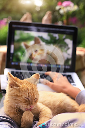 Free Red Kitten Lick Its Paw On Human Knees With Laptop Royalty Free Stock Photos - 98751988