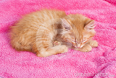 Red kitten on the pink towel