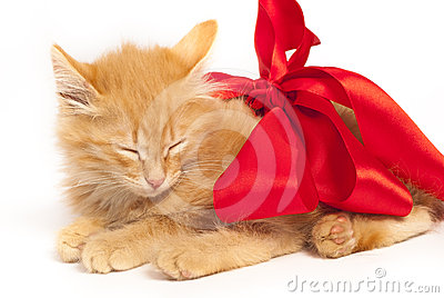 Red kitten with red ribbon