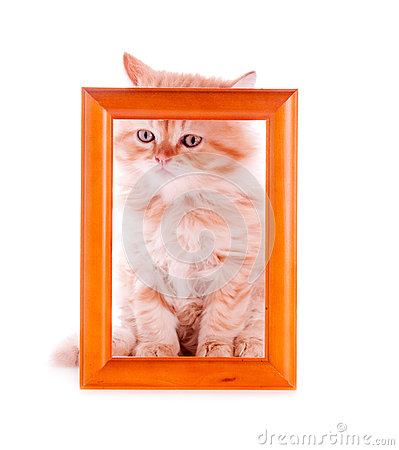 Red kitten sitting at a wooden frame