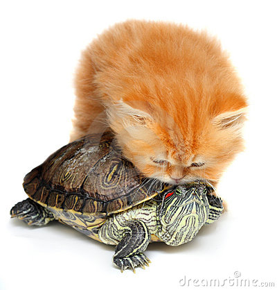 Free Red Kitten With Sea Turtle Royalty Free Stock Photo - 20419645