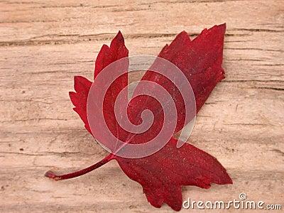 Red Leaf Fall