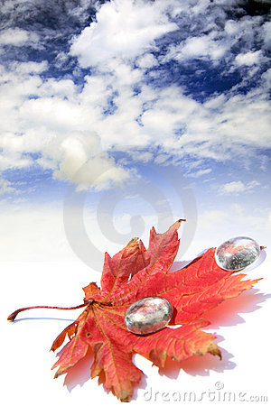 Red leaf and few glass waterdrops