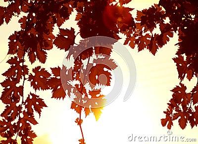 Red leaves border