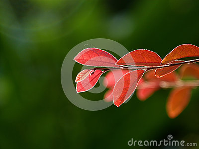 red leaves and green background form contrast