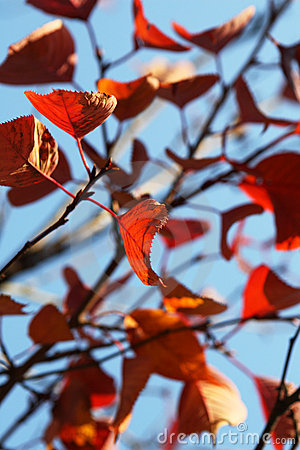 Red leaves over sky