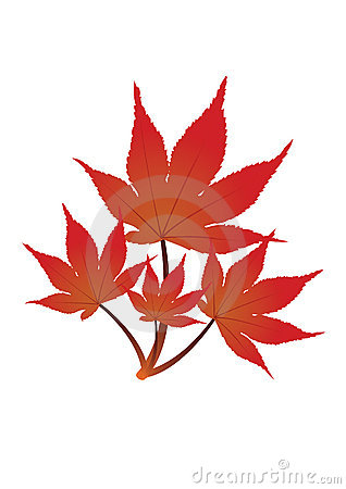 Red leaves - vector