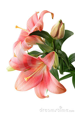 Free Red Lily Stock Image - 9325911