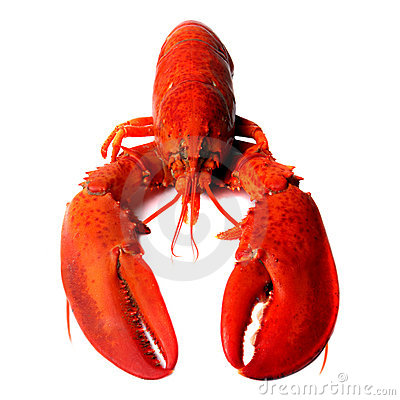 red lobsters leave blue pretty