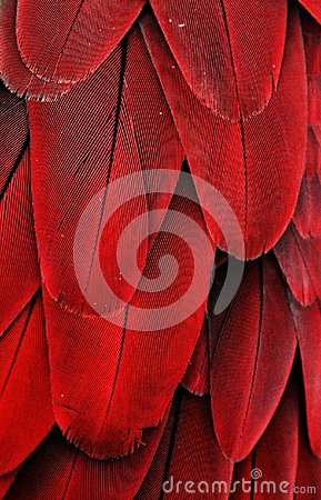 Free Red Macaw Feathers Stock Photo - 38866260