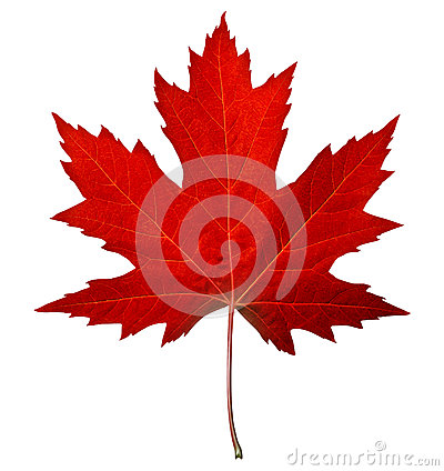 Free Red Maple Leaf Stock Image - 26162151
