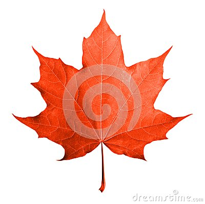 Free Red Maple Leaf Isolated Stock Photography - 42266842
