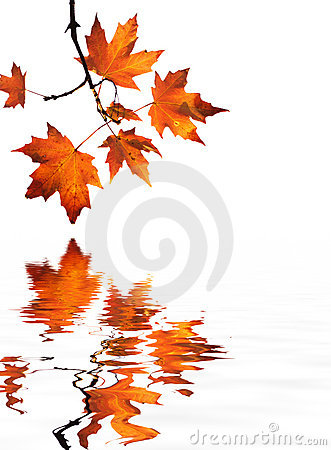 Red maple leaves reflection