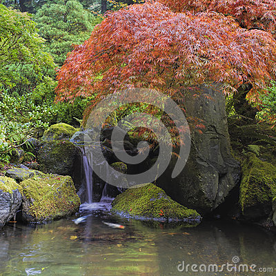 Red Maple Tree Over Waterfall Pond Royalty Free Stock