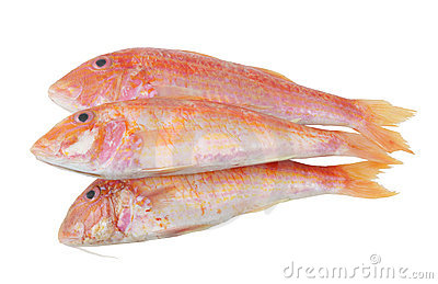 Red mullet fish isolated
