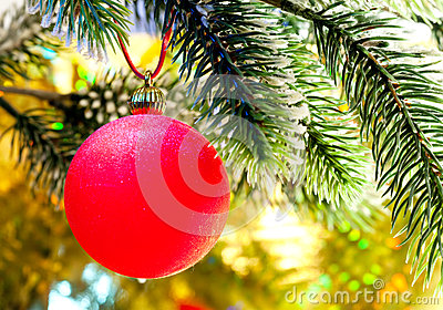 Red New Year s ball on a branch of a Christmas tree.
