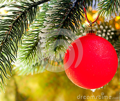 Red New Year s ball on a branch of a Christmas tree.Christmas still life