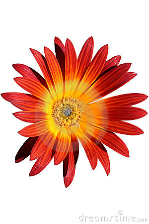 Red and orange flower