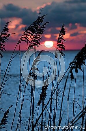 Red Orange Sunset