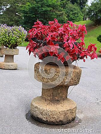 Red Ornamental plants