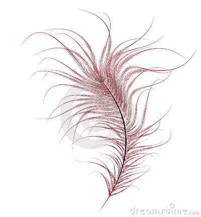 Free Red Ostrich Feather Stock Photography - 16951922