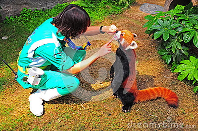 red panda and trainer Editorial Image