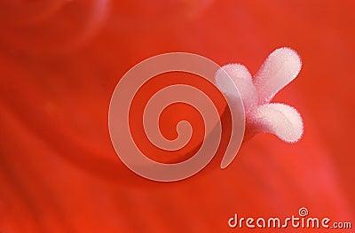 Red petal